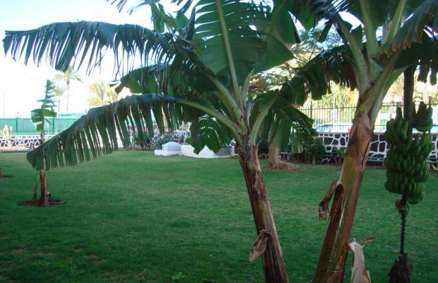 фотографии Los Cactus изображение №20