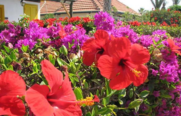 фото Faros Holiday Village изображение №2
