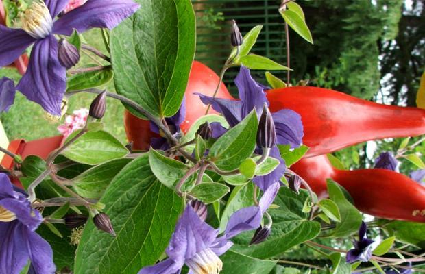 фото Trakia Garden (Тракия Гарден) изображение №2