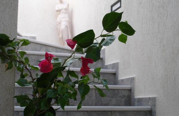 фотографии отеля Ippocampos Studios изображение №27