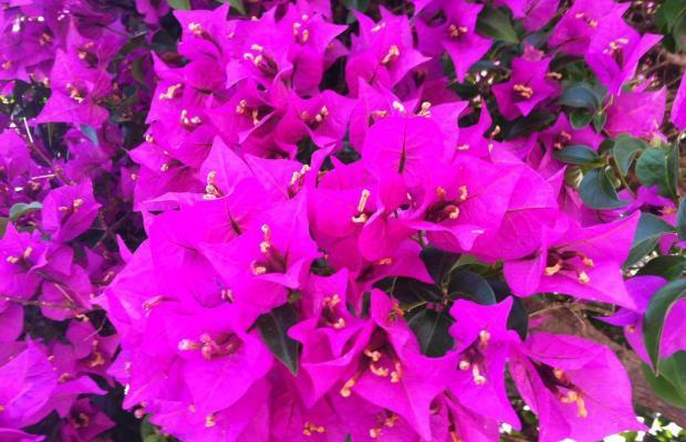 фотографии отеля Flower Villa Apart изображение №3