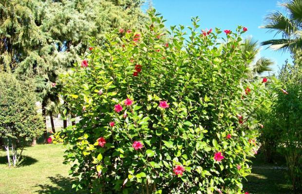 фотографии отеля Club Turkuaz Garden изображение №15