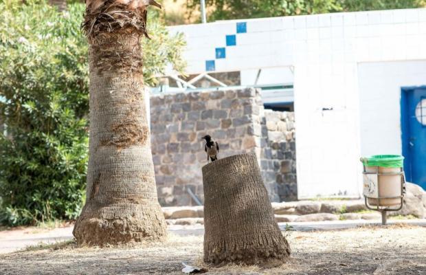 фото Amnun 2000 Recreation Village (ex. Tulip Inn Sea of Galilee) изображение №2