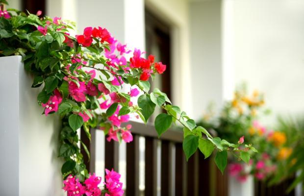 фотографии Lotus Muine Resort & Spa изображение №32
