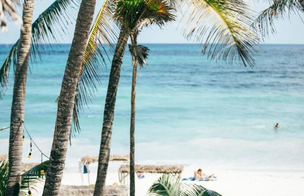 фотографии Papaya playa изображение №12