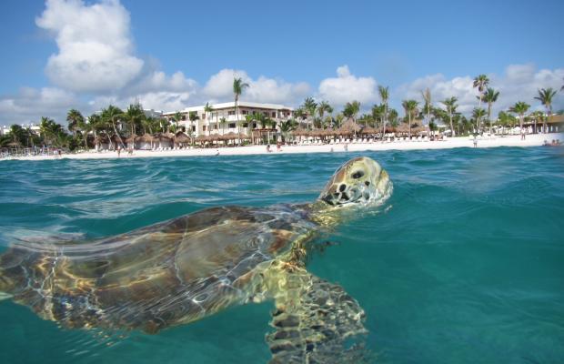 фотографии отеля Akumal Beach Resort изображение №7