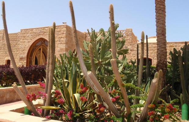 фотографии отеля Movenpick Resort El Quseir изображение №43
