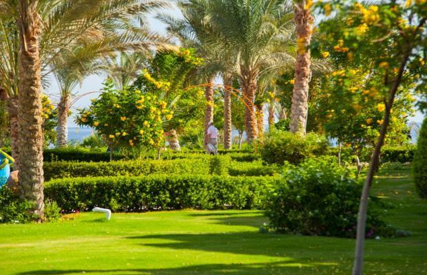 фото Fantazia Resort Marsa Alam (ex.Shores Fantazia Resort Marsa Alam) изображение №58