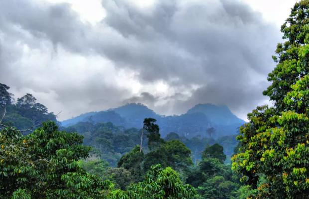 фотографии Borneo Tropical Rainforest изображение №4