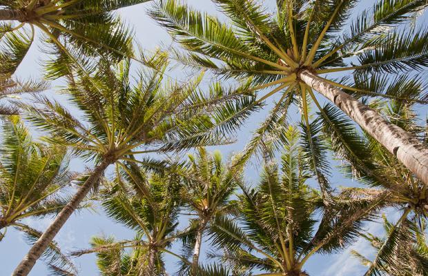 фотографии Rieseling Boracay Beach Resort изображение №28