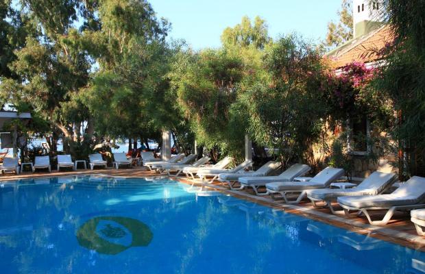 фотографии отеля Okaliptus изображение №3